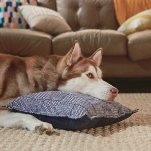 Dog with head on pillow