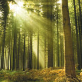 Forest with sun shining