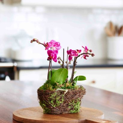 Hallmark Flowers - Petite Purple Duo Orchid in Twig and Moss Container